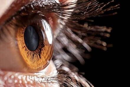 Nærbilde av et øye.