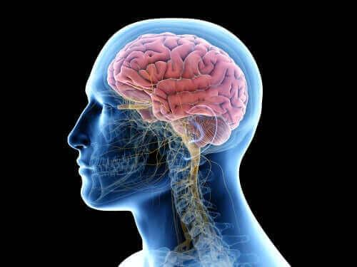 hjernevev