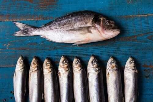 Fet fiskop rekke og rad på en blå treflate.
