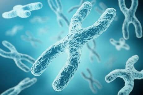 Hvordan skjer inaktiveringsprosessen for X-kromosom?