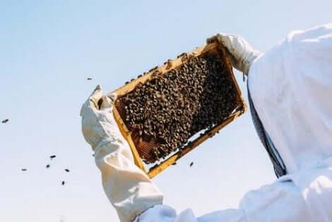 Birøkter og bier