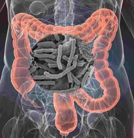 Omsorg for sammensetningen av mikrobiotaen er grunnleggende i håndteringen av komplekse sykdommer, spesielt de av gastrointestinal karakter.