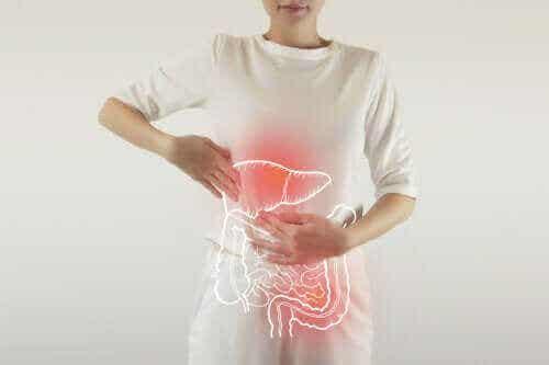 Fordøyelsesenzymer: Hva gjør de?