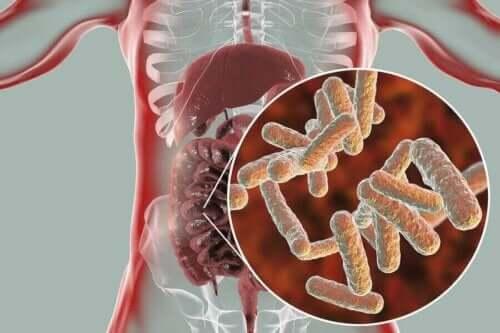 Tarmbakterier