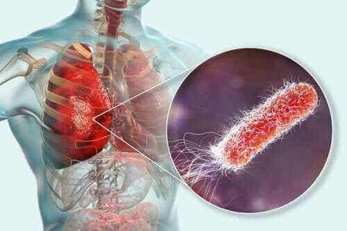 Finnes det bakterier i lungene?
