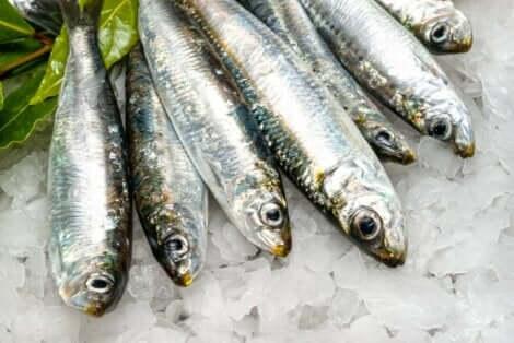 Fordelene med sardiner