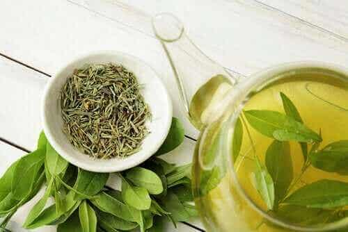 Visste du at grønn te forlenger levetiden?