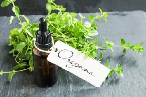 Hvordan tilbereder du hjemmelaget oreganoolje og hva er fordelene?