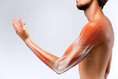 En arm med synlige muskler.