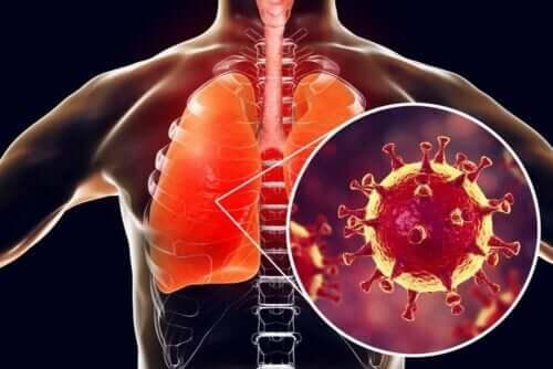 En lunge med bakterier.