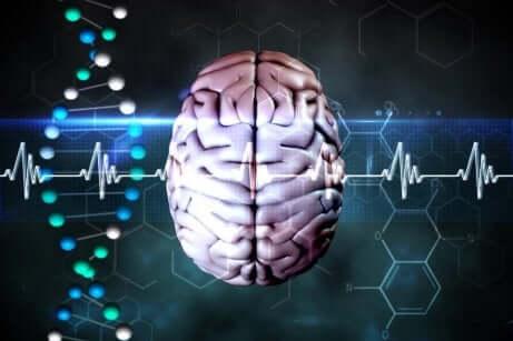 Hjernens forsvarsmekanisme