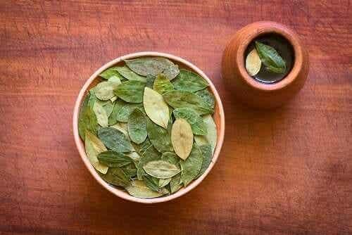 Te av kokablader og dens helsemessige fordeler