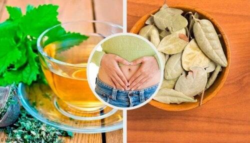Fem urter for å forbedre fordøyelsesproblemer