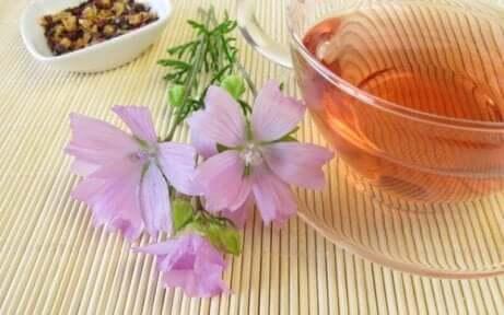 Kattost er en plante som er rik på tanniner og antocyaniner