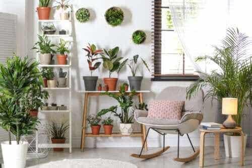 Robuste planter som ikke krever mye omsorg