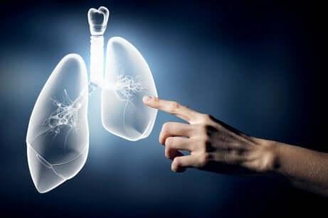 en hånd som berører lungene på en skjerm.