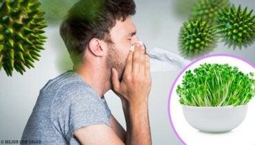 6 fordeler med å spise lusern