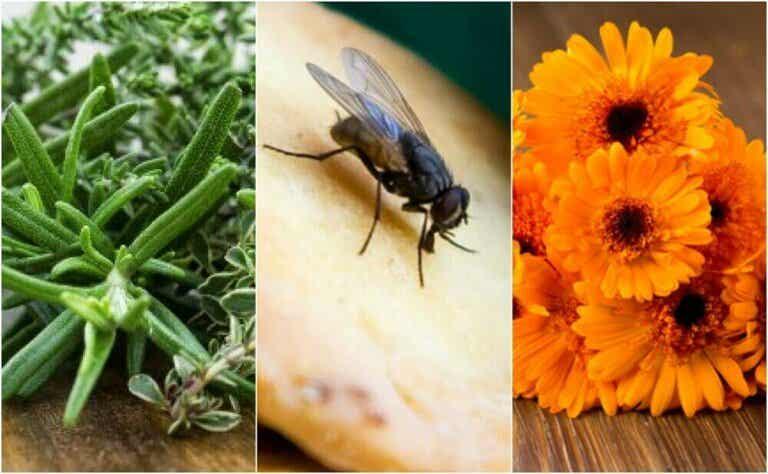 6 hjemmeremedier for plagsomme fluer
