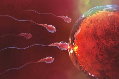 Hvor lang tid tar det å bli gravid etter samleie?