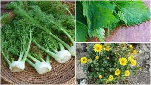 8 overraskende spiselige planter