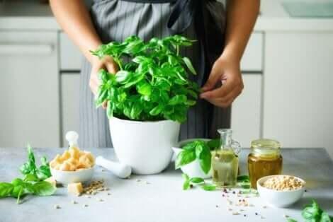 Basilikum er populært i verdens kjøkken og også i naturlig medisin.