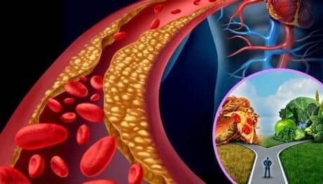 Optimale kolesterolnivåer og dets varianter