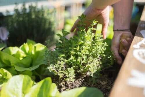 Oppdag de beste tipsene for å skape en hage på terrassen