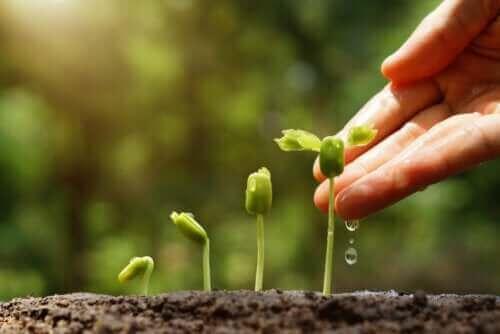 Oppdag 6 tips for en bærekraftig hage