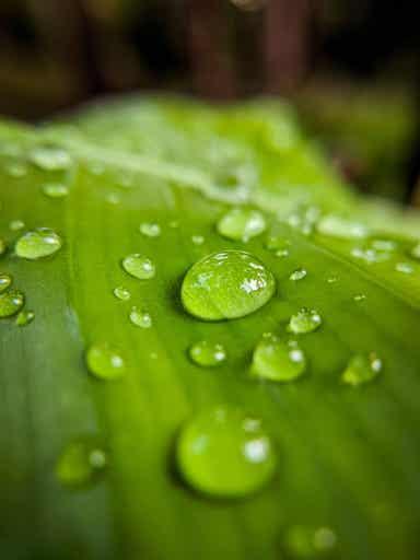 Noe regnvann på et blad