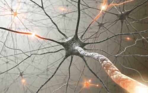 Et nettverk av nevroner.