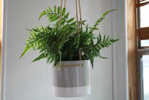 En hengende plante