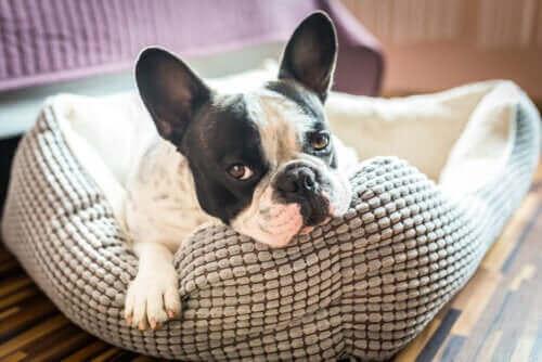 Oppdag 5 ideer til hus for kjæledyr