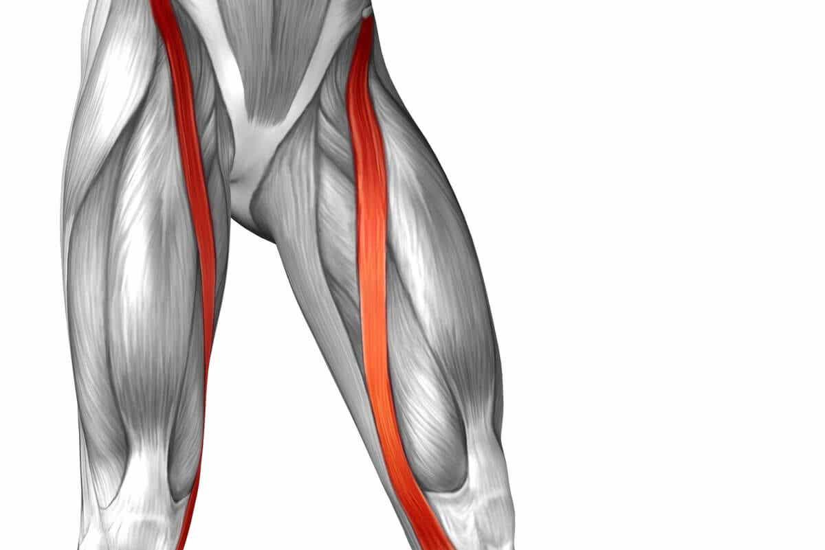 sartorius muskel anatomi