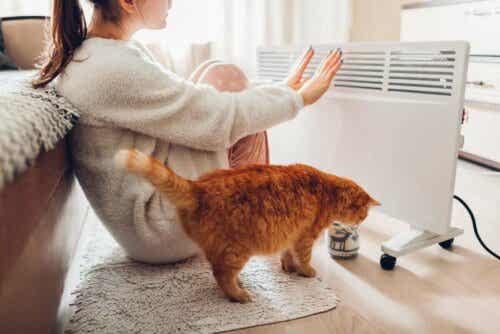 En kvinne og en katt foran en elektrisk ovn