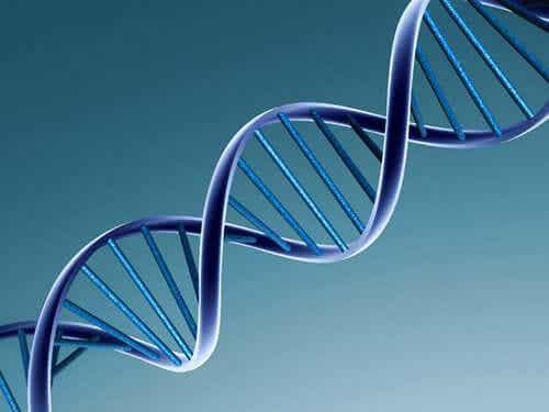 En DNA-kjede.
