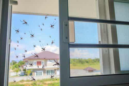 Mygg prøver å komme inn i et hus