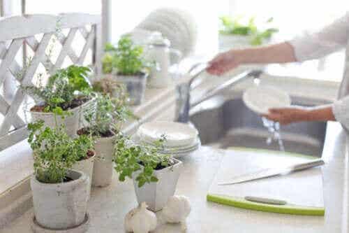 5 fordeler med å ha planter på kjøkkenet