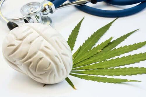 Effekten av cannabis på hjernen