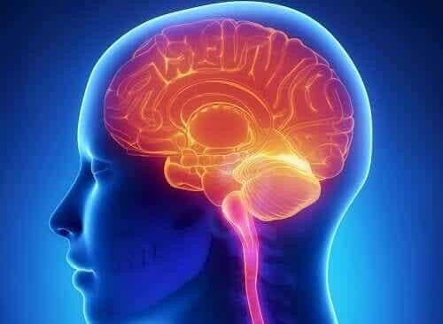 Et dramatisert bilde av hjernen.