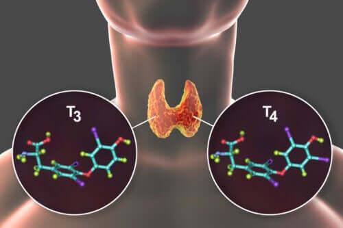 Tyroksin: Hva det er og tilhørende sykdommer